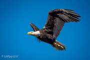 28th Nov 2017 - Fly Like An Eagle