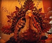 23rd Nov 2017 - Turkey Day