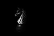 28th Nov 2017 - return of the dark knight...