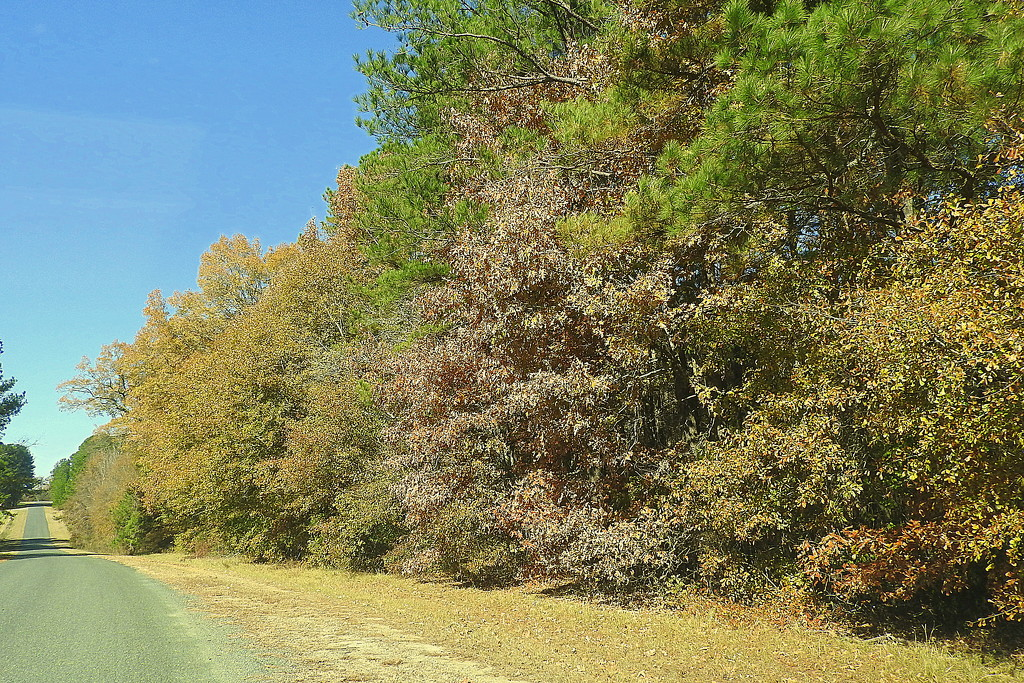 Autumn Drive by homeschoolmom