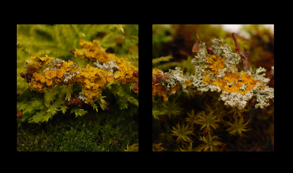 Lichen and Mosses by fbailey