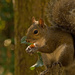 Mr Grey Squirrel Showing Me How to Eat! by rickster549