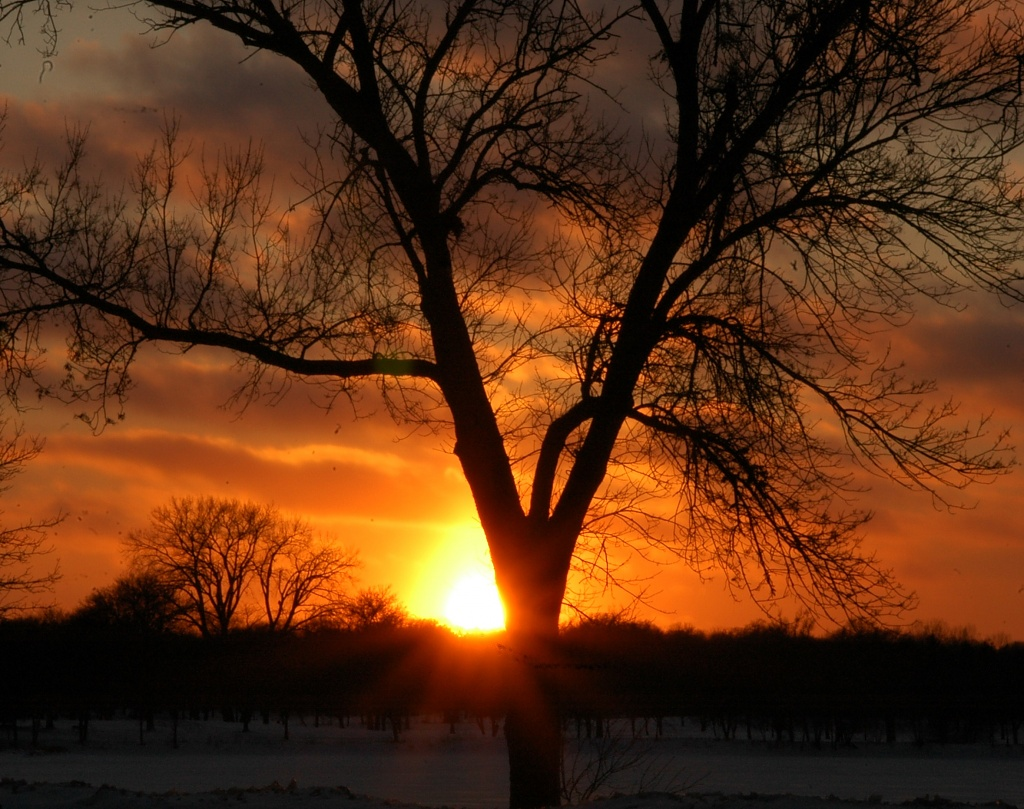 The Last of the Sun on the First of the Year by pfmandeville