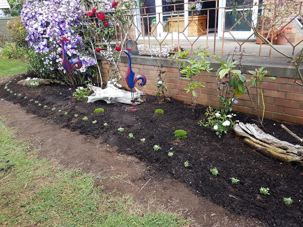 Gardening.... Diary Shot..  by julzmaioro