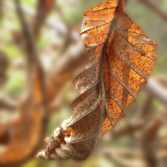 Gold leaf I by helenhall