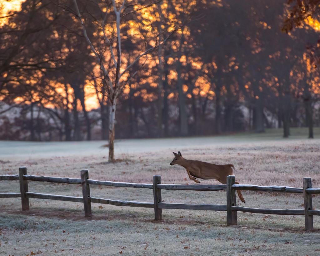 Deer + Sunrise = Beautiful Day by dridsdale