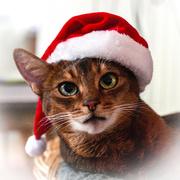 1st Dec 2017 - It's December!