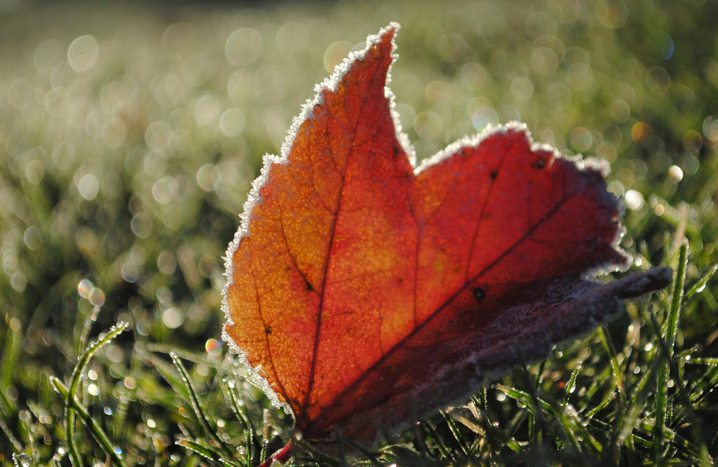 Winter Kissed Autumn All Sugar Sweet by alophoto