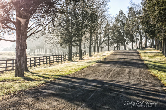 Tree Lined Road in the Fog by cindymc
