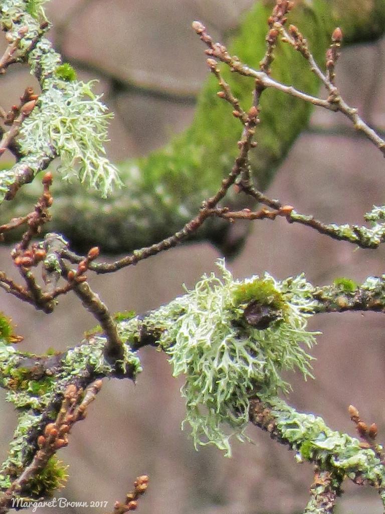 Lichen 2 by craftymeg