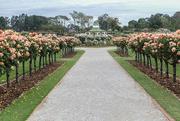 2nd Dec 2017 - The National Rose Garden