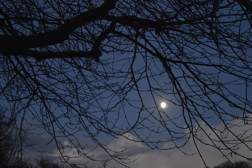 Moonlight by redandwhite