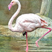 Flamingo with a change of scenery ;-) by ludwigsdiana