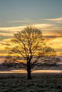 2nd Dec 2017 - The Cliche Tree