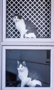 29th Nov 2017 - window cats