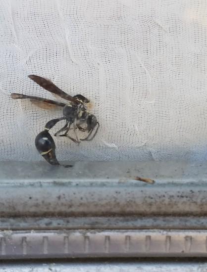 Wasp by photohoot