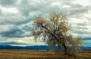 3rd Dec 2017 - Favorite Tree