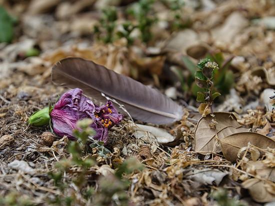 Garden Detritis by salza