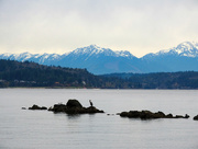 3rd Dec 2017 - Puget Sound