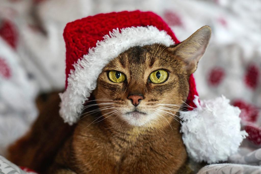 Seriously Santa by berelaxed