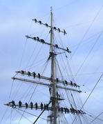 3rd Dec 2017 - To The Masts