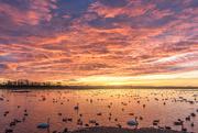 1st Dec 2017 - Swan lake