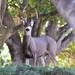 My Deer Neighbors by mbrutus
