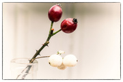 1st Dec 2017 - Rose hips and snowberries