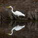Egret Reflection! by rickster549