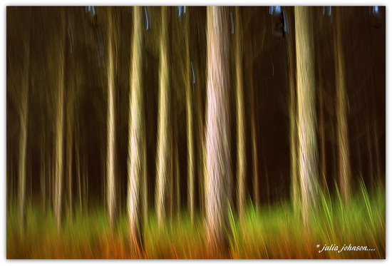 Forest in ICM by julzmaioro