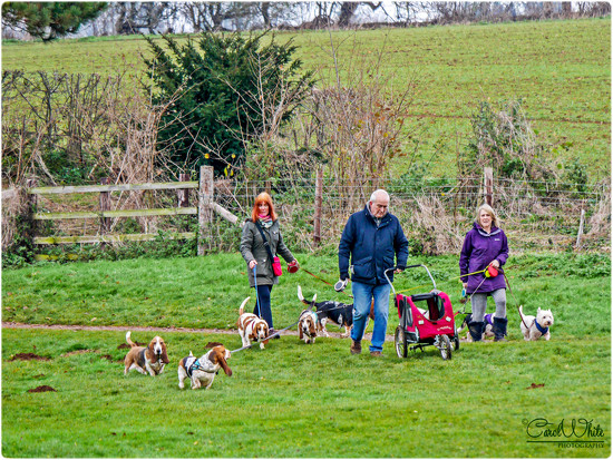 Walking The Dogs by carolmw