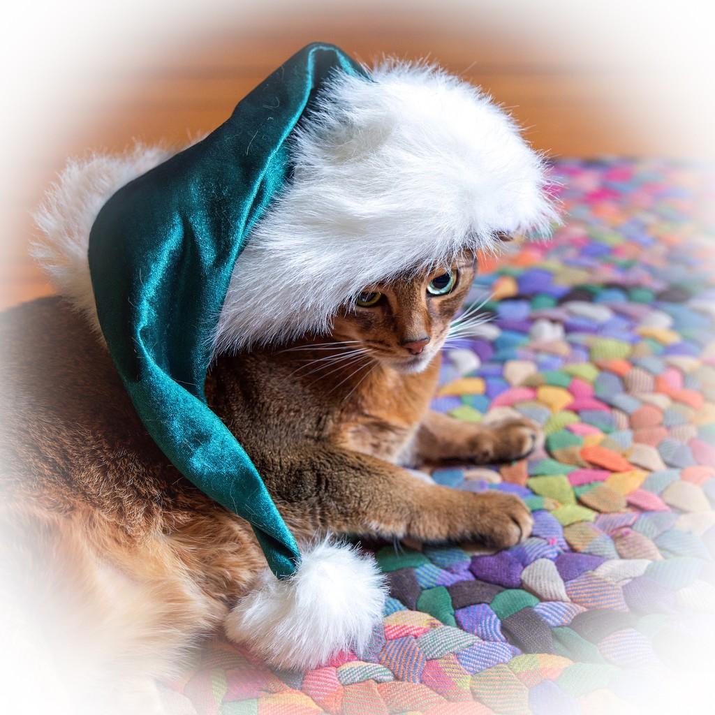 Sugar Plum Santa Cat by berelaxed