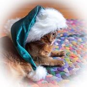 4th Dec 2017 - Sugar Plum Santa Cat