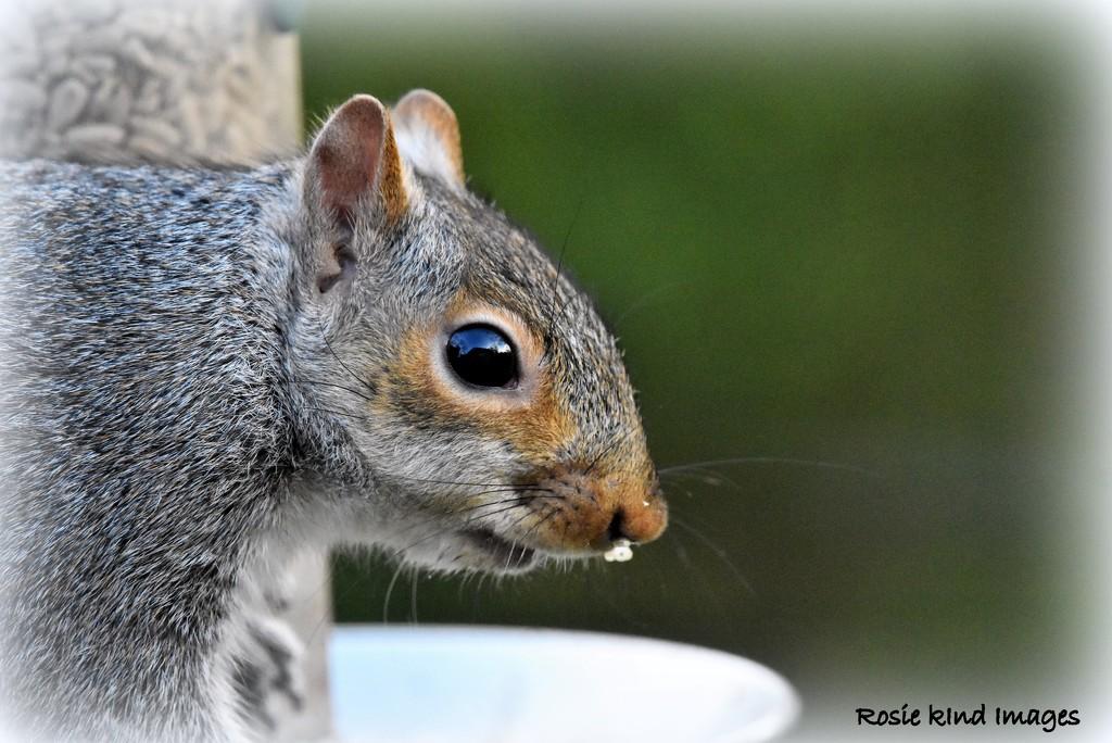 Naughty Squizzer by rosiekind