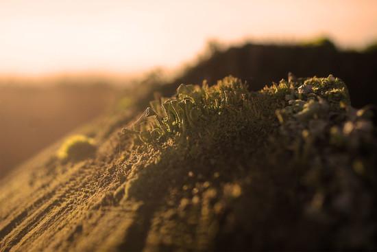 Alien Landscape (or moss....) by jesperani