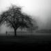 more misty goodness