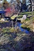 4th Dec 2017 - Spring Creek