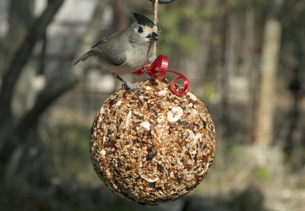 Seed and Nut Ornament by gaylewood