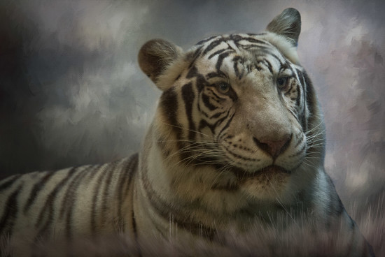 Bengal Tiger at Big-Cat-Habitat by taffy