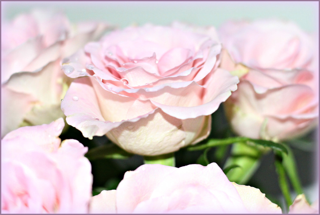 Pink Roses For Mum. by wendyfrost