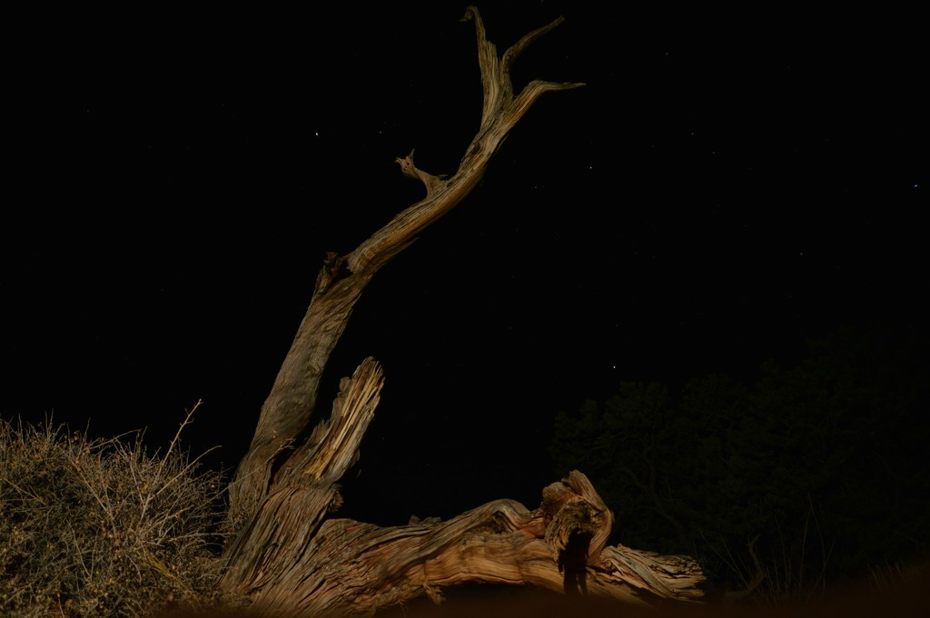 night shot in Canyonlands by bigdad