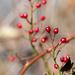 Red Berries Portrait