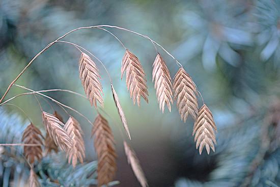 Beautiful grass! by fayefaye