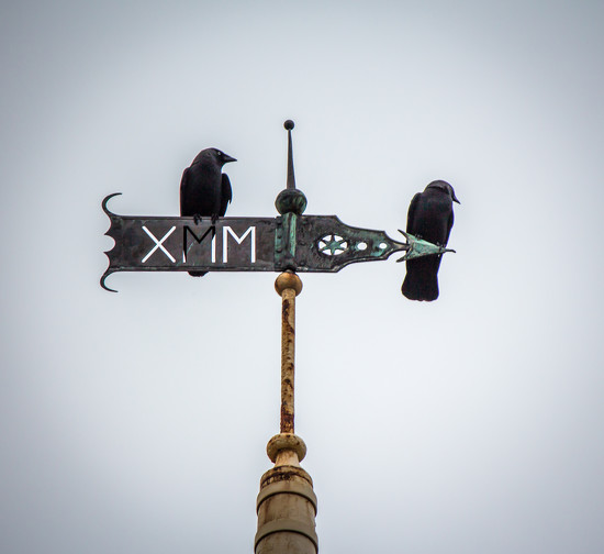 Weather Vane  by swillinbillyflynn