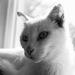White Cat In Black & White