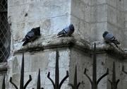 5th Dec 2017 - three pigeons