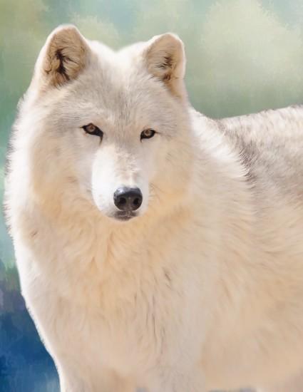 White Wolf  by joysfocus
