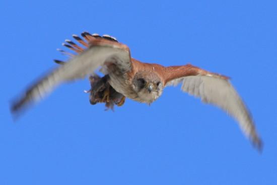 Hawk eye by gilbertwood