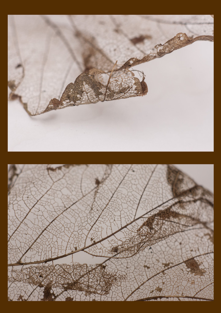 Fragility by fbailey