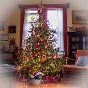 6th Dec 2017 - Christmas tree and Santa Cat